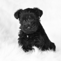 cropped-noble-puppy-2