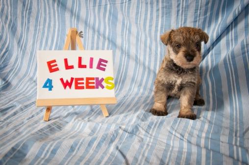Ellie 4 Weeks