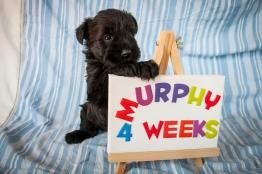 Murphy 4 Weeks