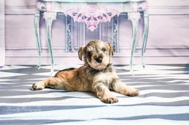 Lady's pups-1