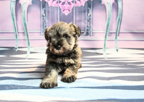 Lady's pups-4